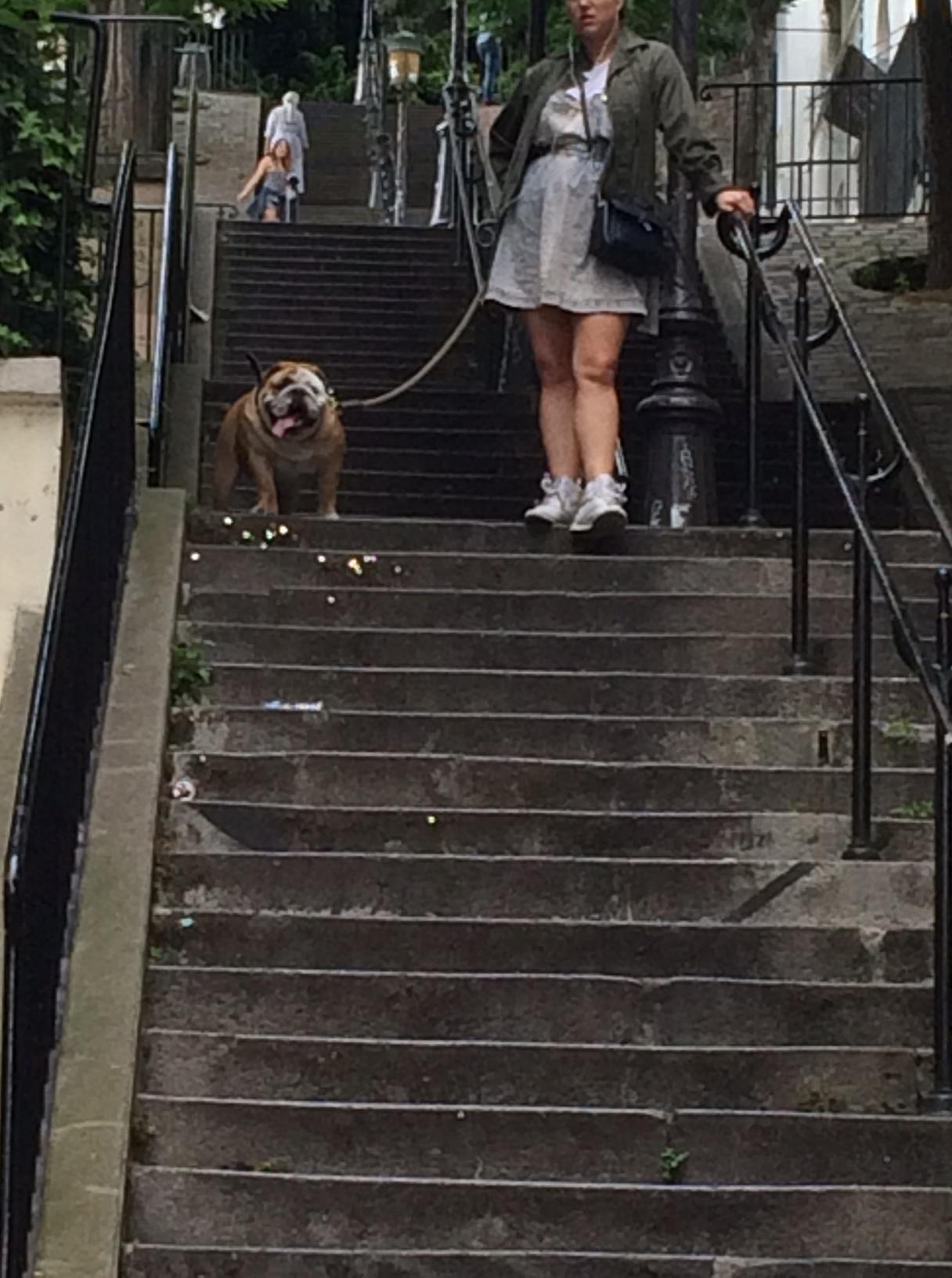chien marches.JPG